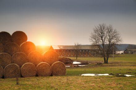 hay bales on a farm