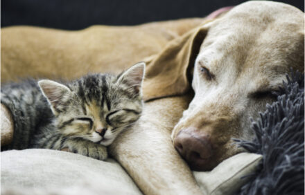 two pets, a dog and cat, sleeping together